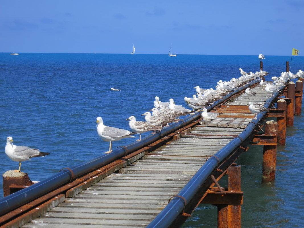Море. Чайки - Светлана Казмина
