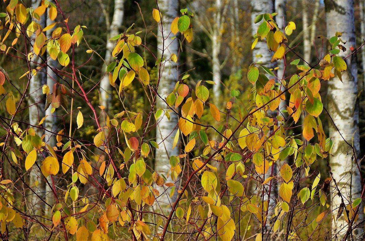 Милая осень... - Sergey Gordoff