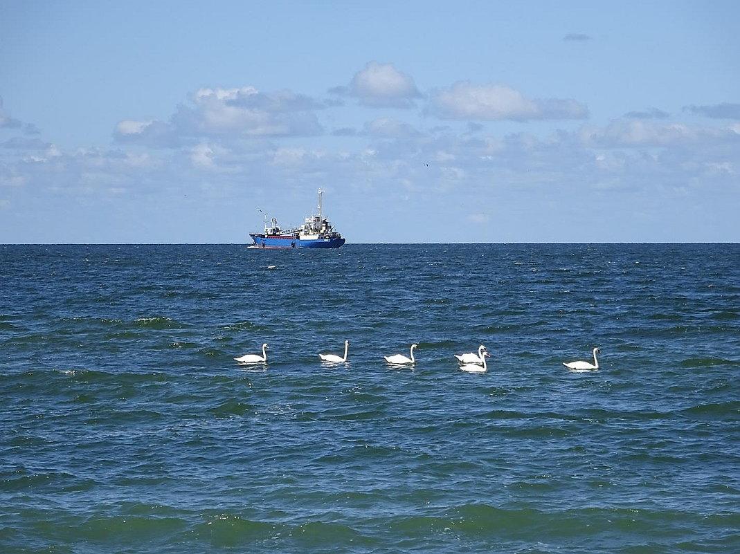 Лебеди на море - Маргарита Батырева