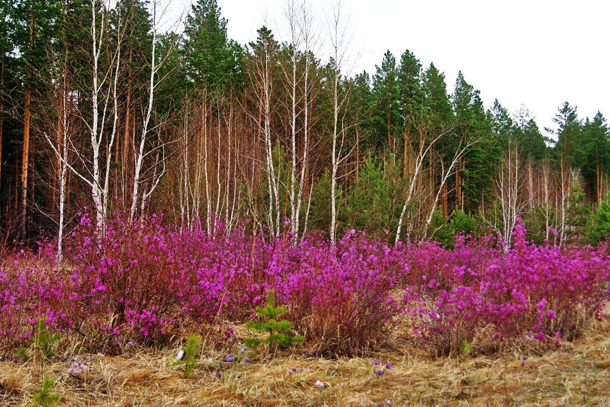 забайкальская весна - Надежда Мельникова