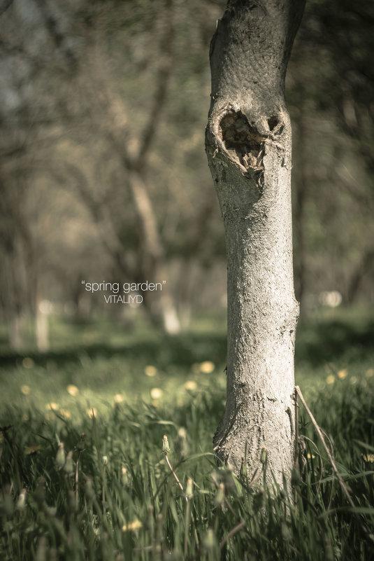 spring - Vitaliy Dankov