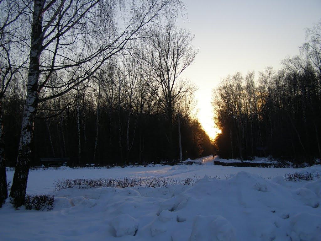 аллея в закатном солнце - Анна Воробьева