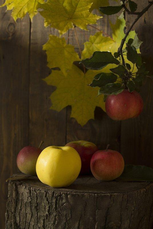 Вкус осенних яблок - Валерий Хинаки