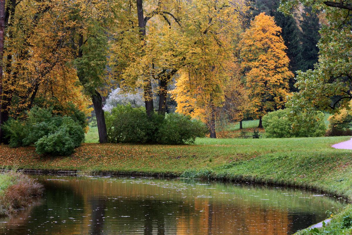 Золотая осень в Павловском парке - Ирина Румянцева