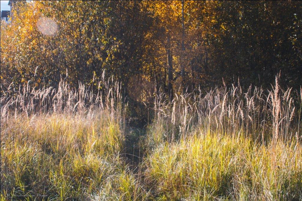 тропинка в лес - Ольга (Кошкотень) Медведева
