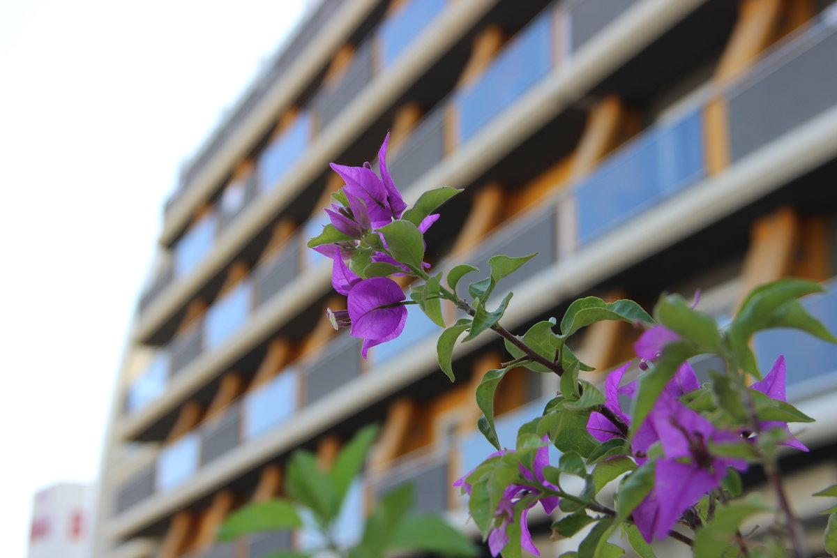 цветок - андрей шилов