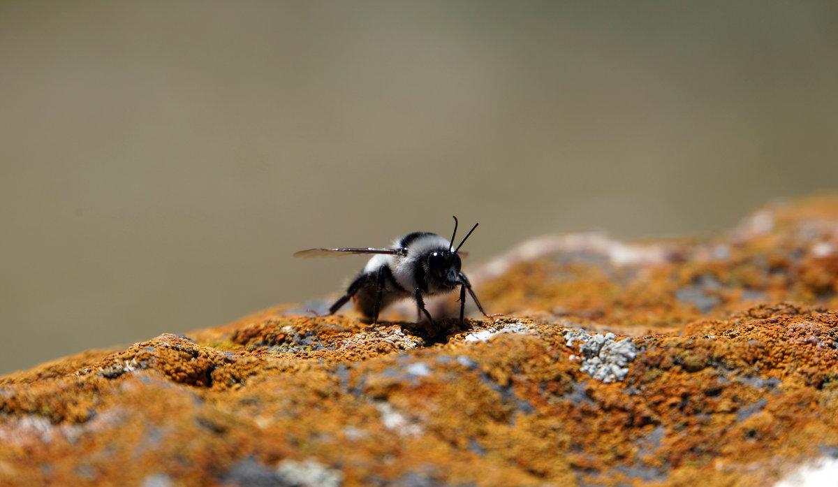 Пчелка - Олег Спиридонов