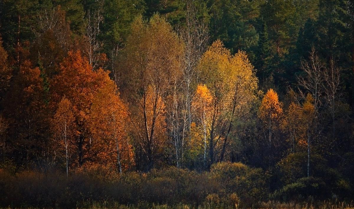 Октябрьский лес - Olenka