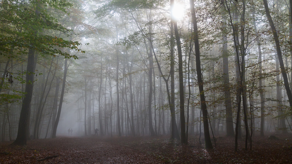 В тумане - Sergey Kukhtichev