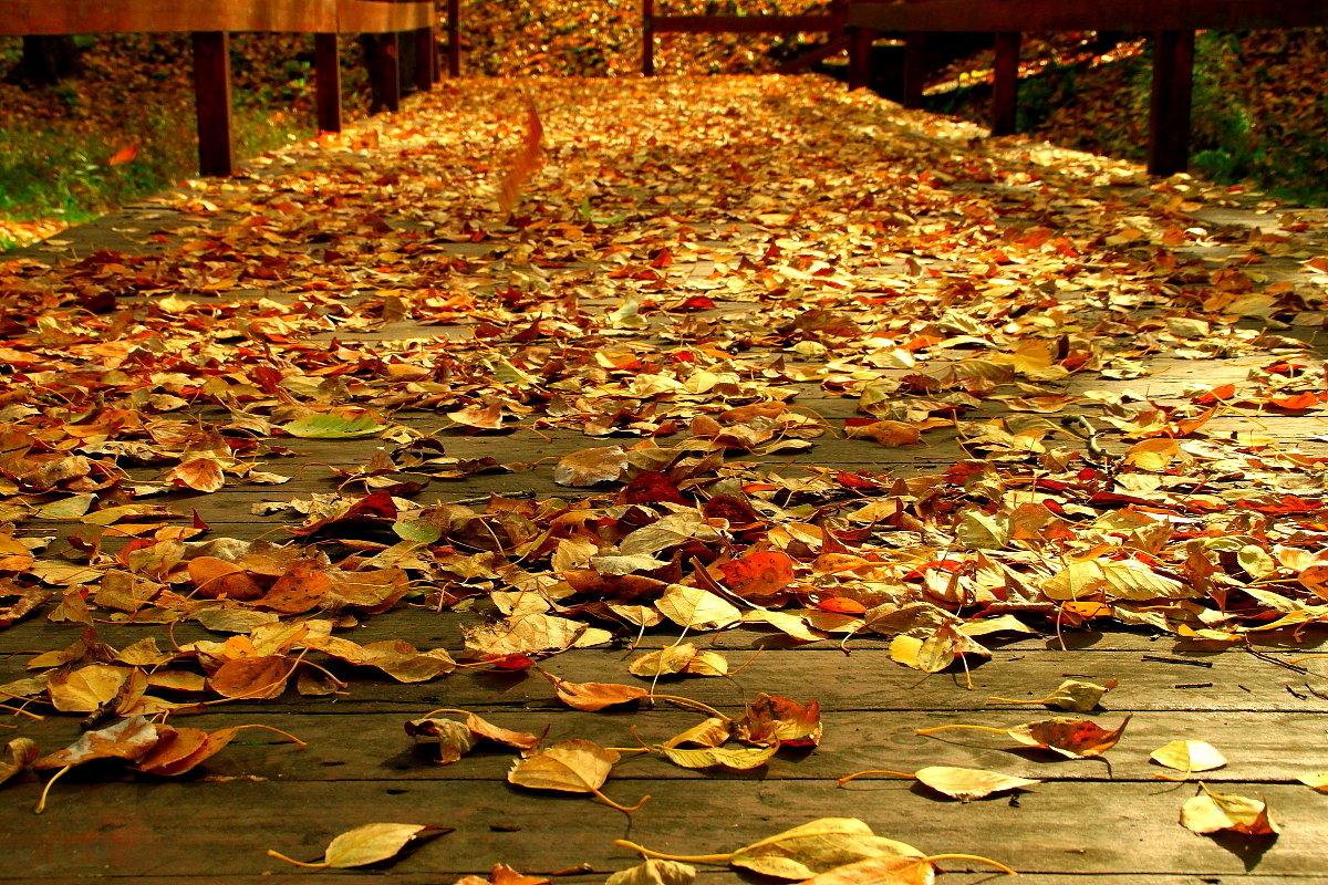 Дорога в Осень - олег свирский