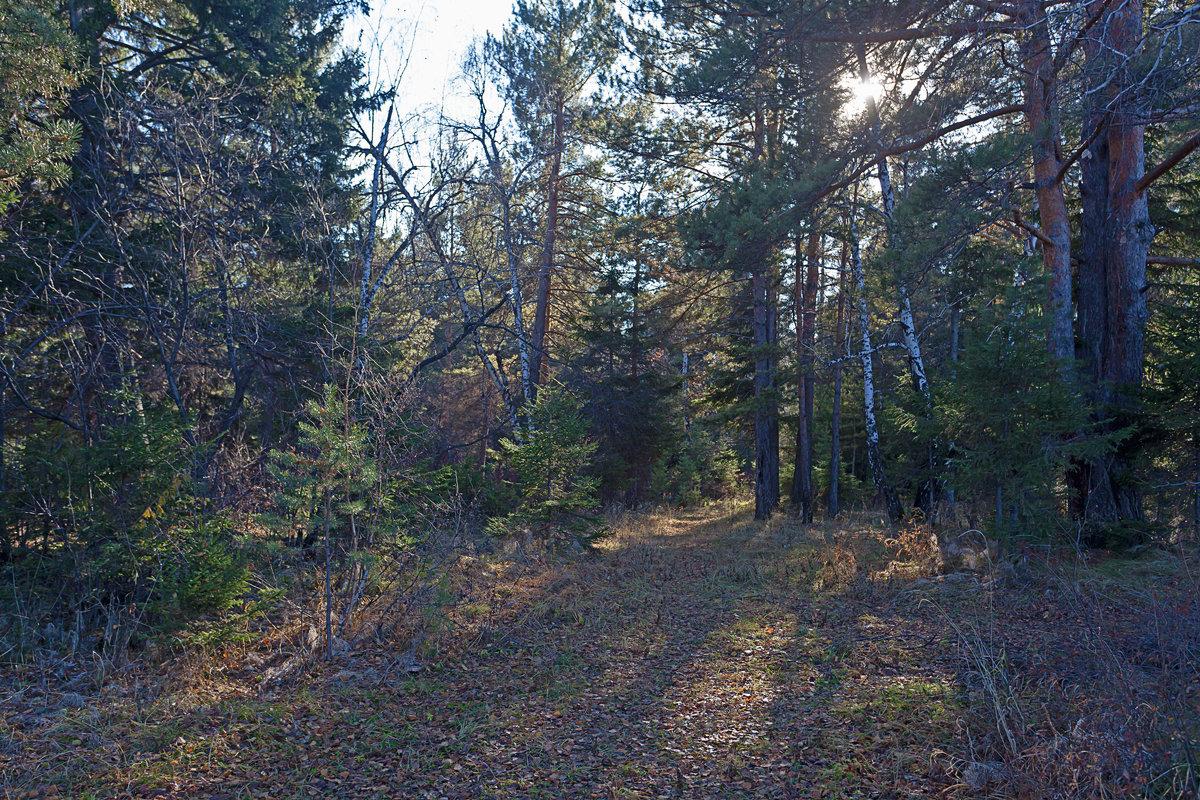 Лесной полумрак - Анатолий Иргл