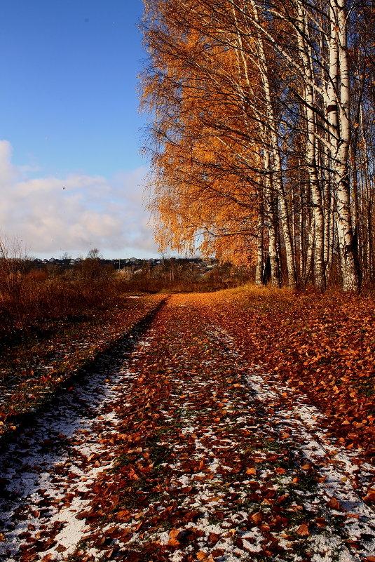 Осень в березовой роще 2 - Татьяна Шаклеина