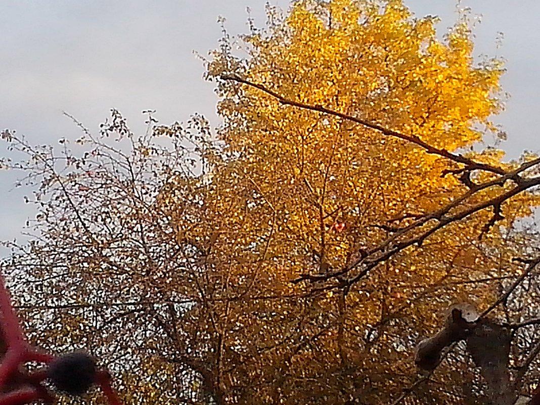 Дачное золото  осени . - Виталий Селиванов