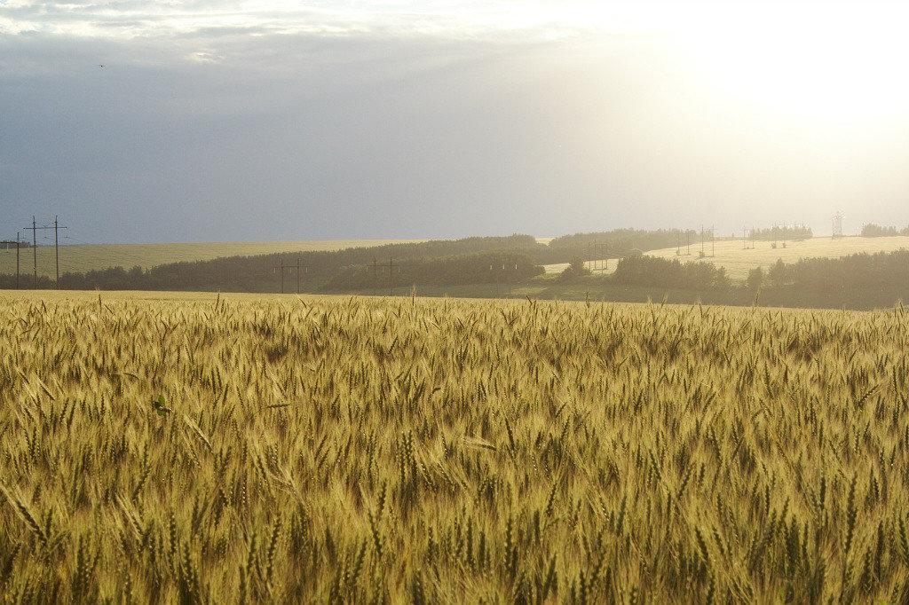 поле - sergeu46 Рагулин