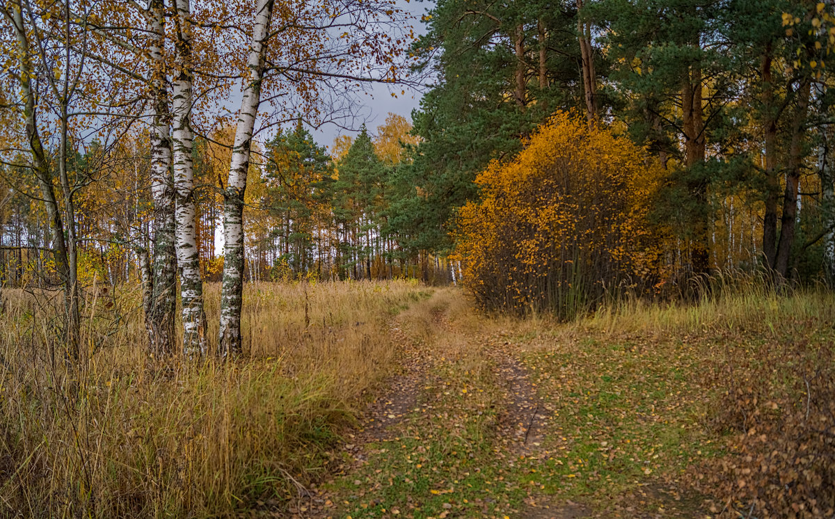Осень в Подмосковье - Андрей Дворников
