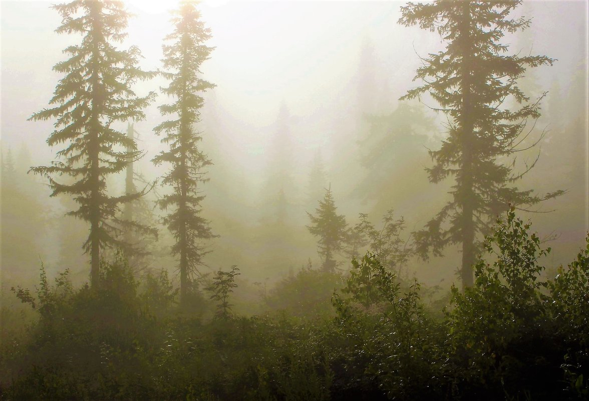 Сырой туман - Сергей Чиняев