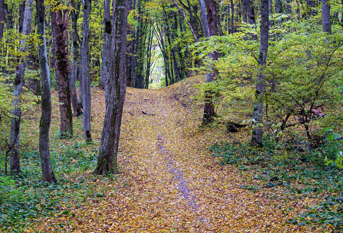 Осень - Vladimir Lisunov