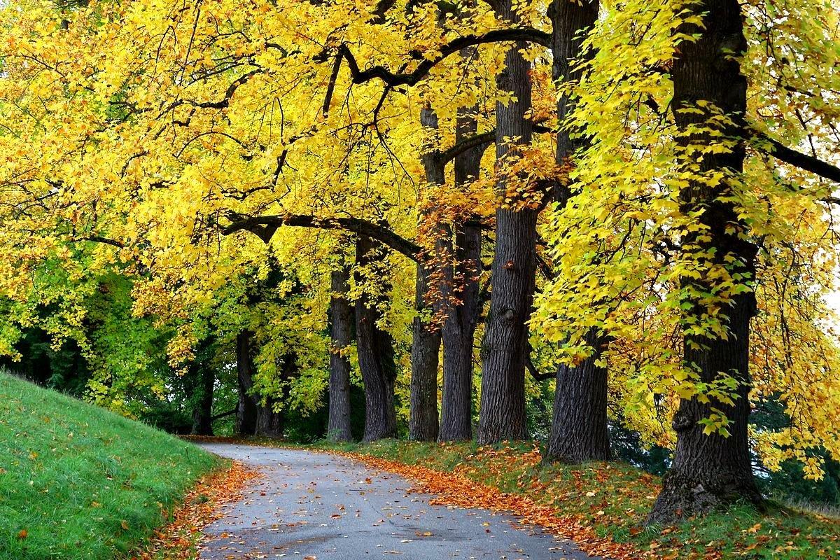 Осенние дорожки - Юрий. Шмаков
