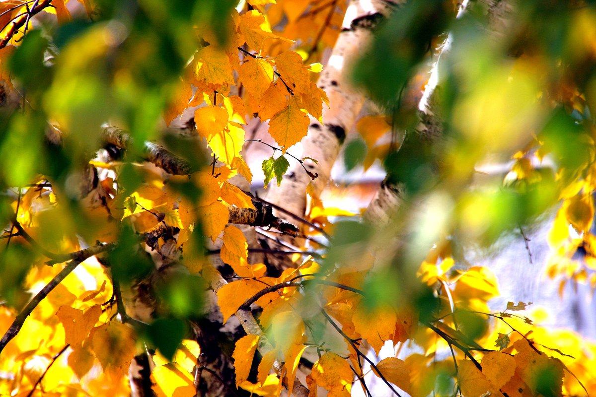 Осенние акварели... - Валерия  Полещикова