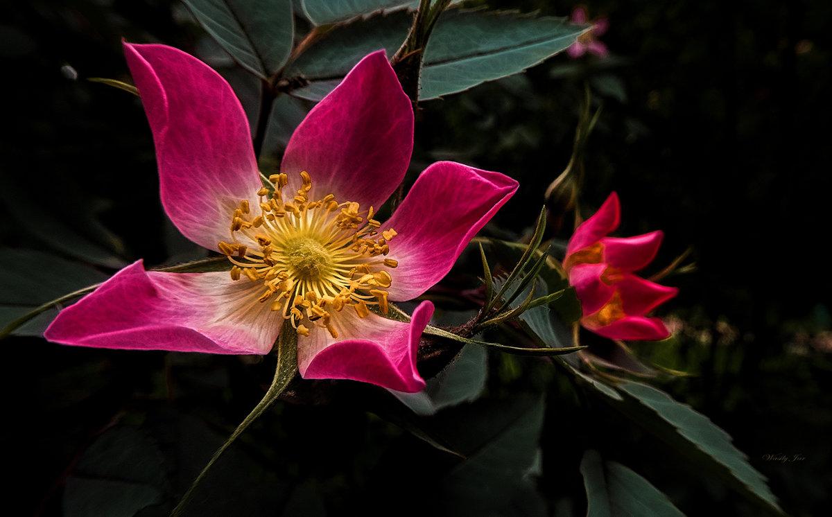 Цветок в парке 60 - Василий Ярославцев