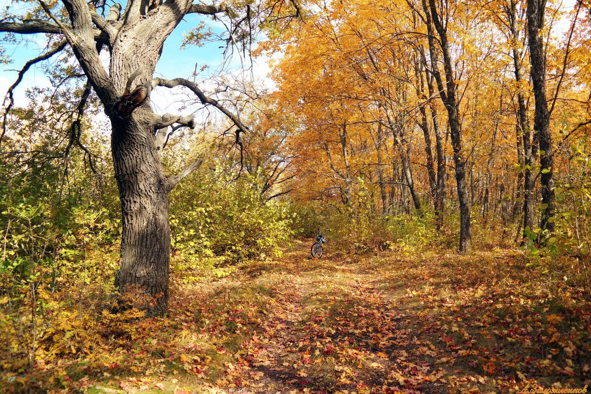 Прогулки в осень по шуршащей листве.. - Андрей Заломленков