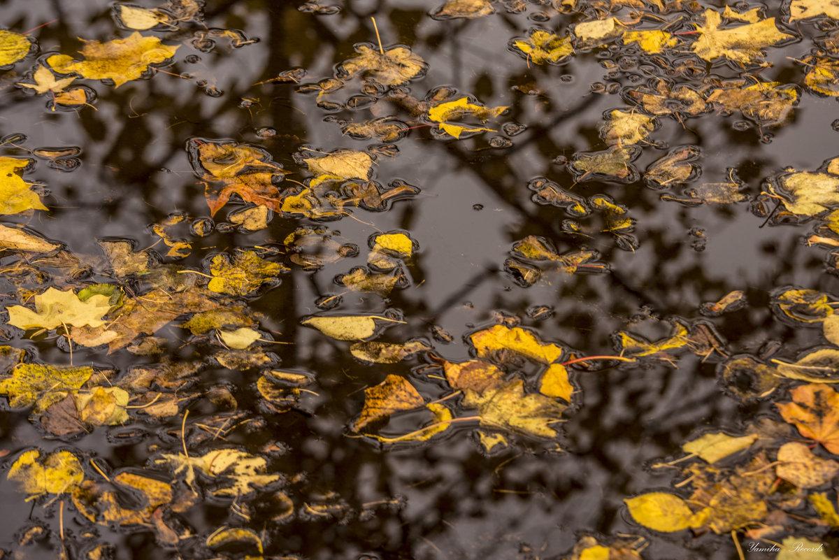 Осень в луже - Михаил Тищенко