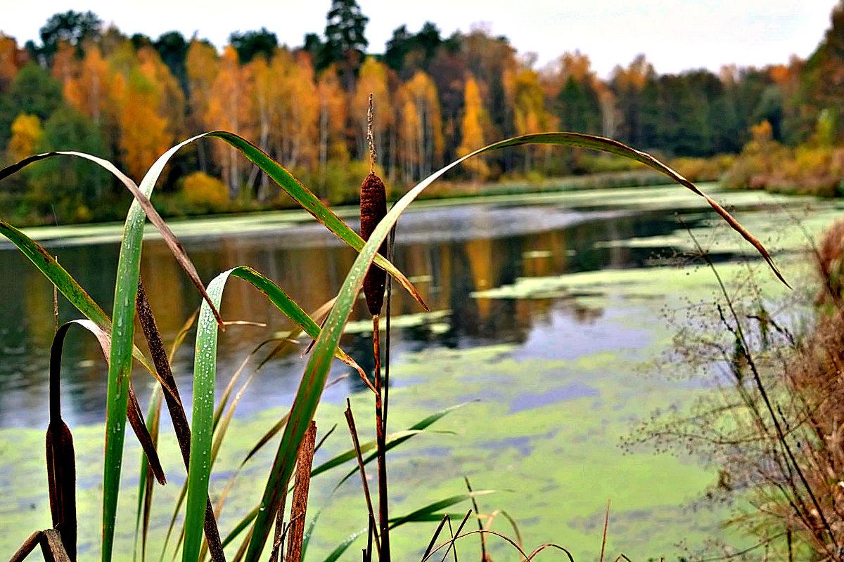 Осень на пруду. - Михаил Столяров
