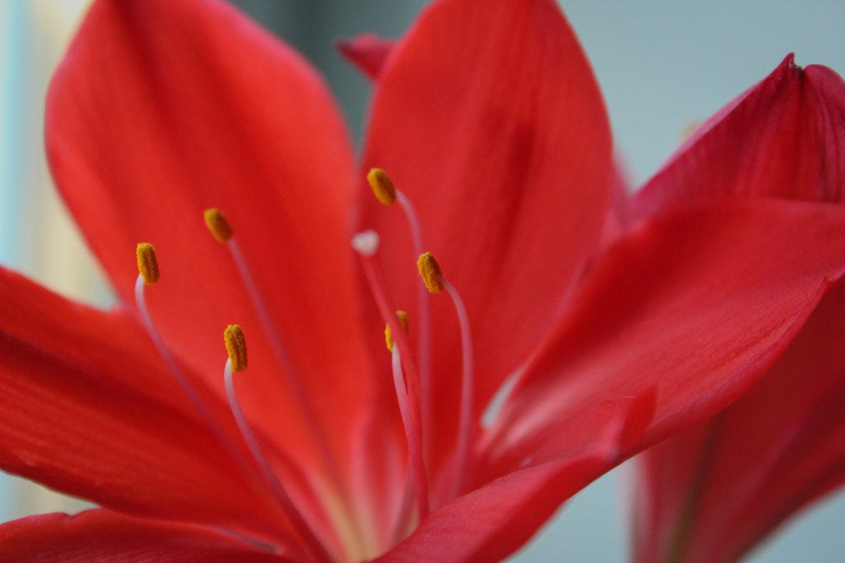 цветение - Gaivor ina