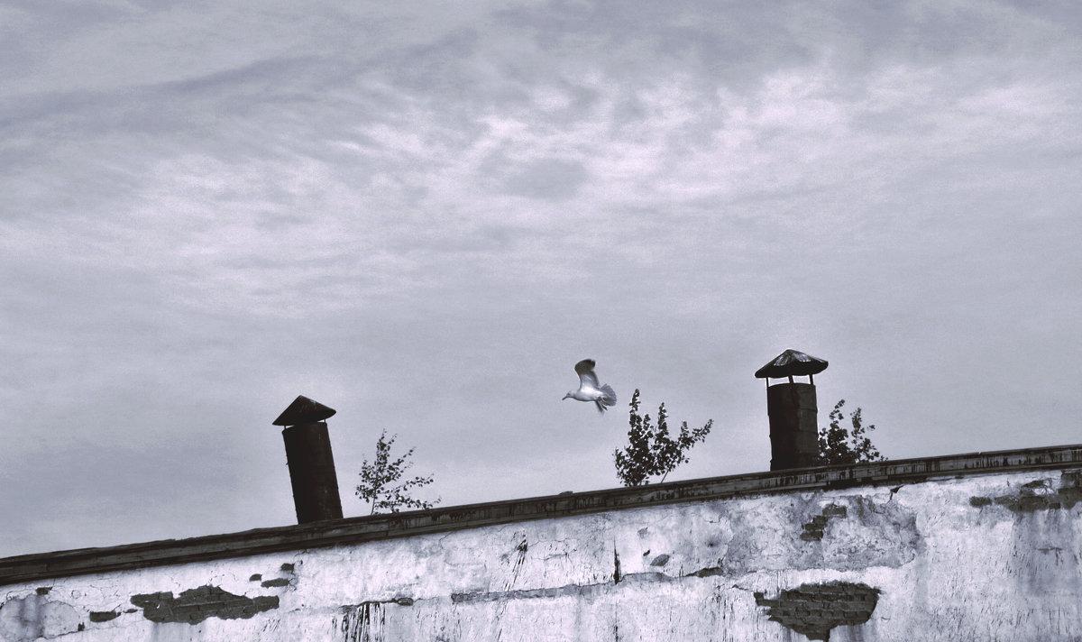 Крыша и чайка - Алексей Хвастунов