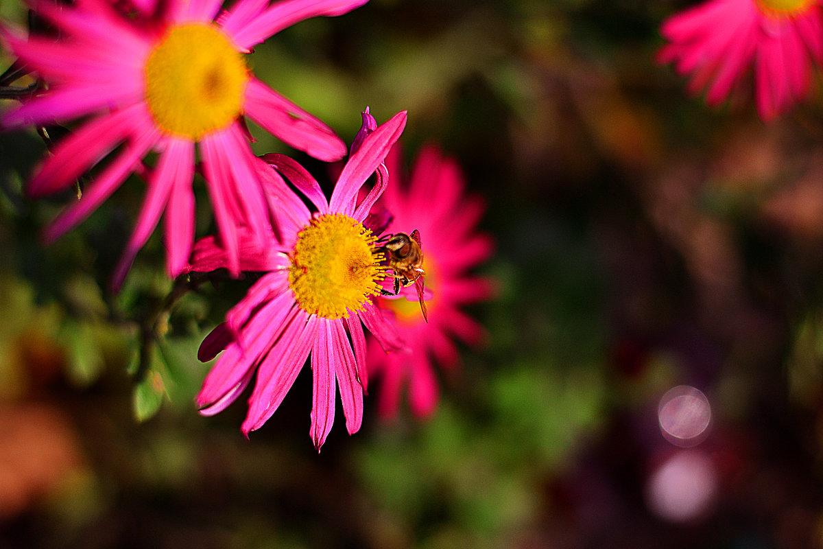 Про пчелу - Сергей Землянский