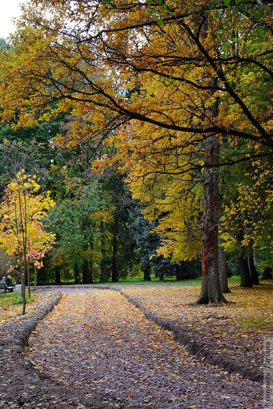 Осенний парк - Татьяна Бронзова
