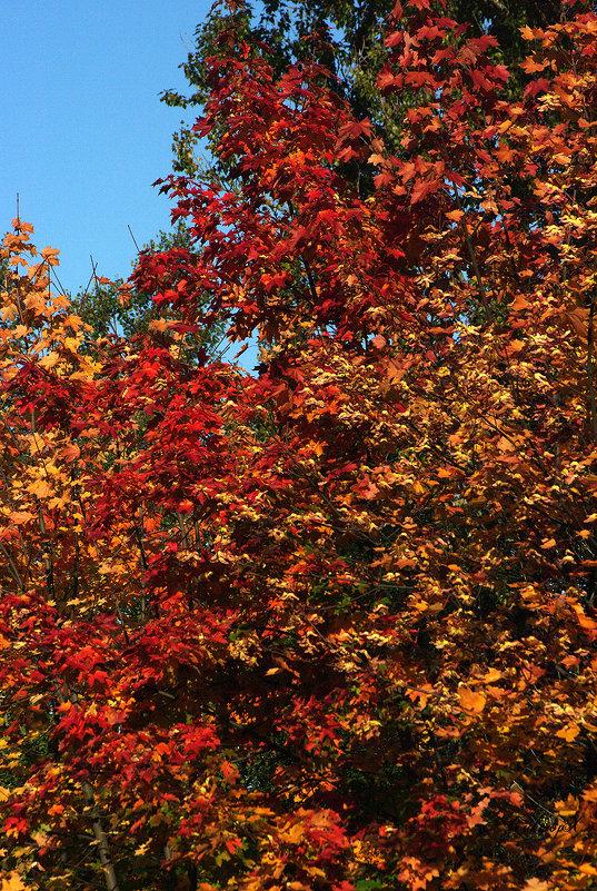 Осенние краски - Виктор Х.