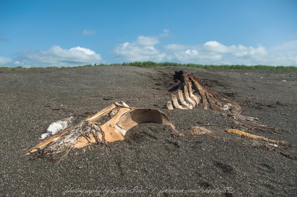 смерть в черных песках Камчатки - Ivan Kozlov
