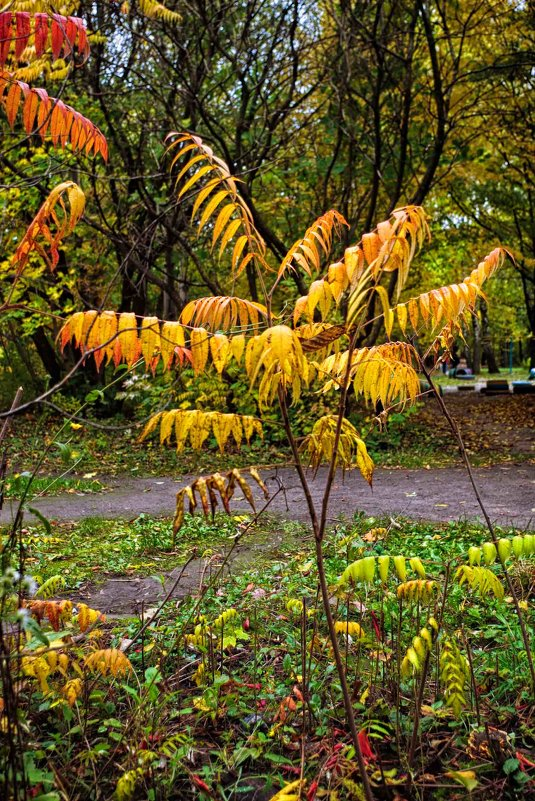 осень - юрий иванов