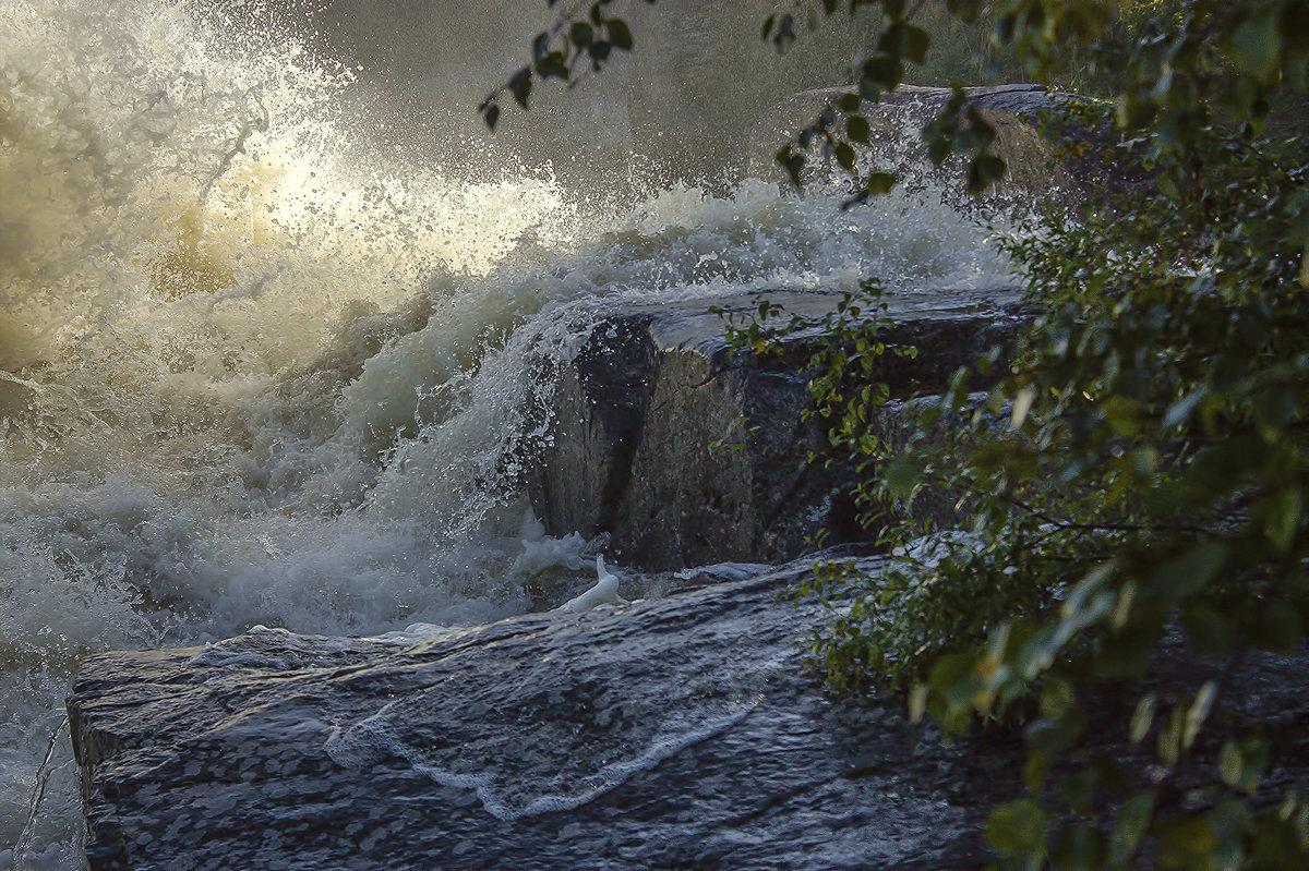 Стихия воды - Анжела Пасечник