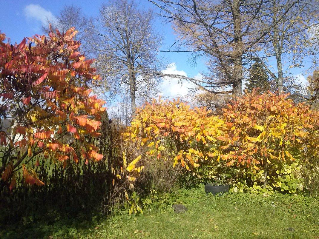 Panoramio garden - silvestras gaiziunas gaiziunas
