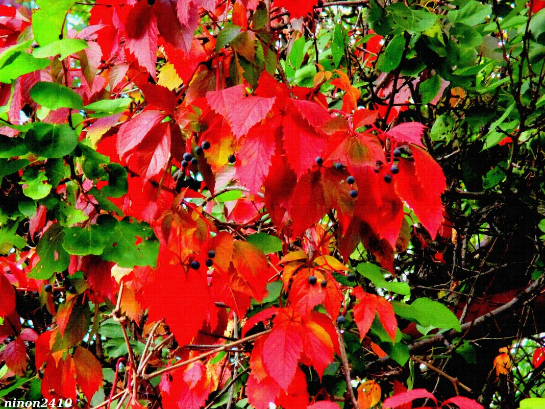Красавица осень - Нина Бутко