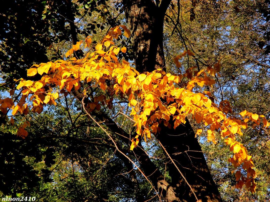 Осенний мотив - Нина Бутко