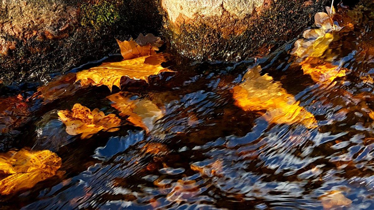Уплывает осень... - Tatjana