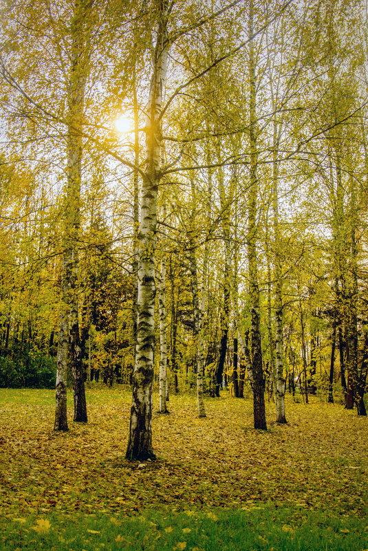 В парке. - Виталий Бененко