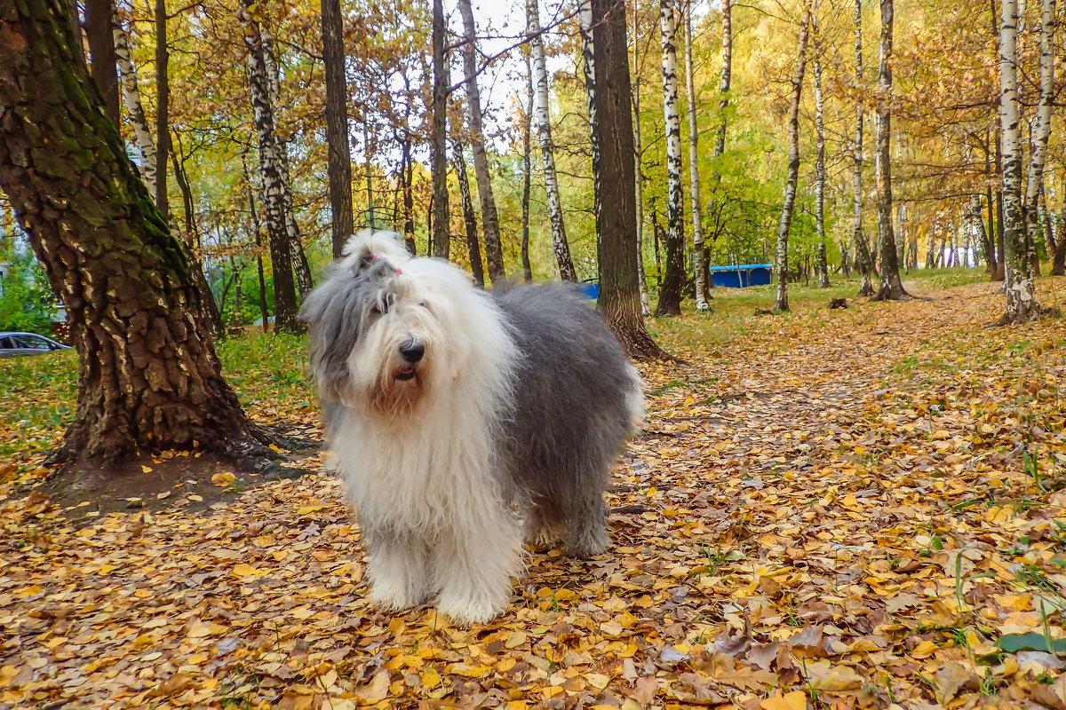 осень в лесочке - Лариса Батурова