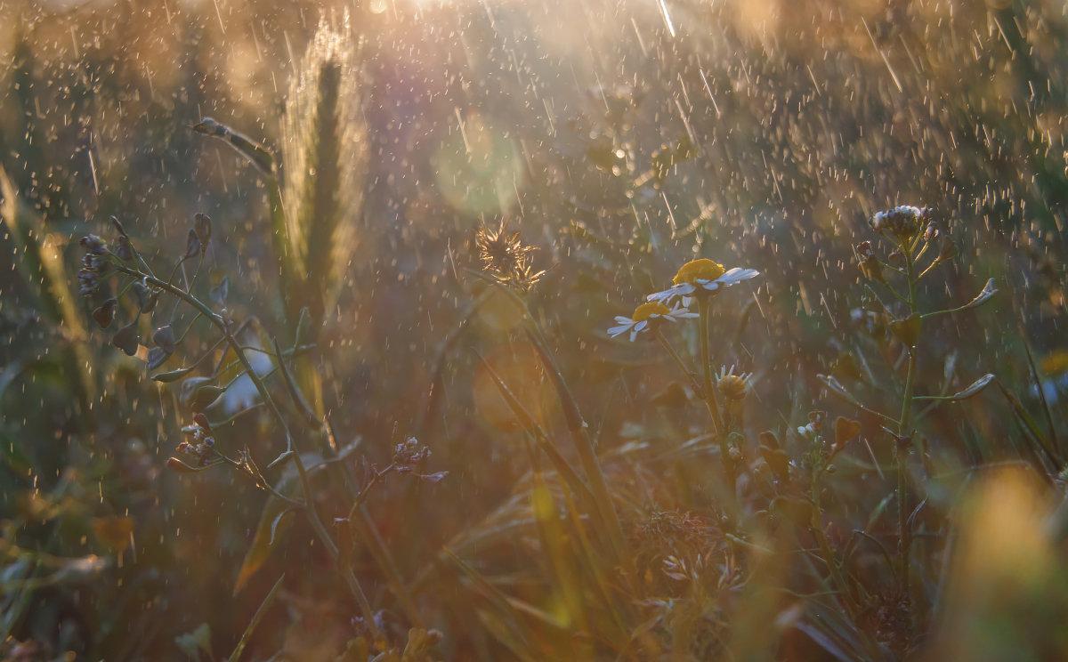 Травы - Алина Шостик