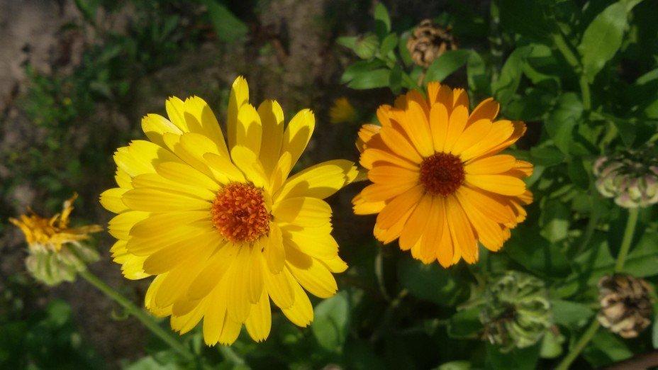 Жёлтый и оранжевый - Дмитрий Никитин