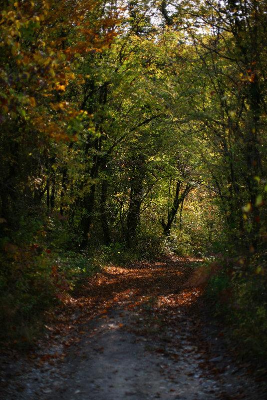 Дорога на осень - Валерий Дворников