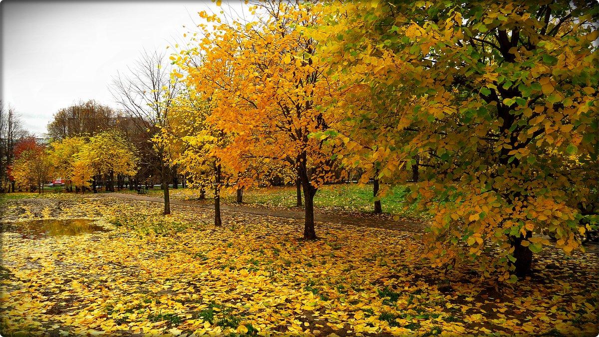 Желтый лист роняет осень... - Елена Швецова