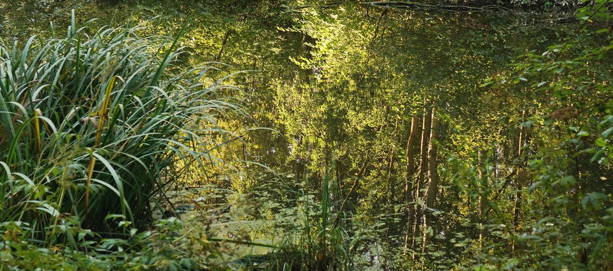 Отражение древ и листвы осенней - Владимир Гилясев