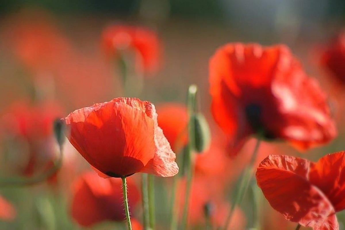 Летние цветы. - donat