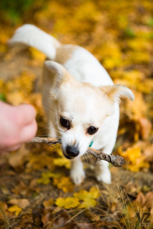 Белая собака грызёт палку - Valentina Zaytseva
