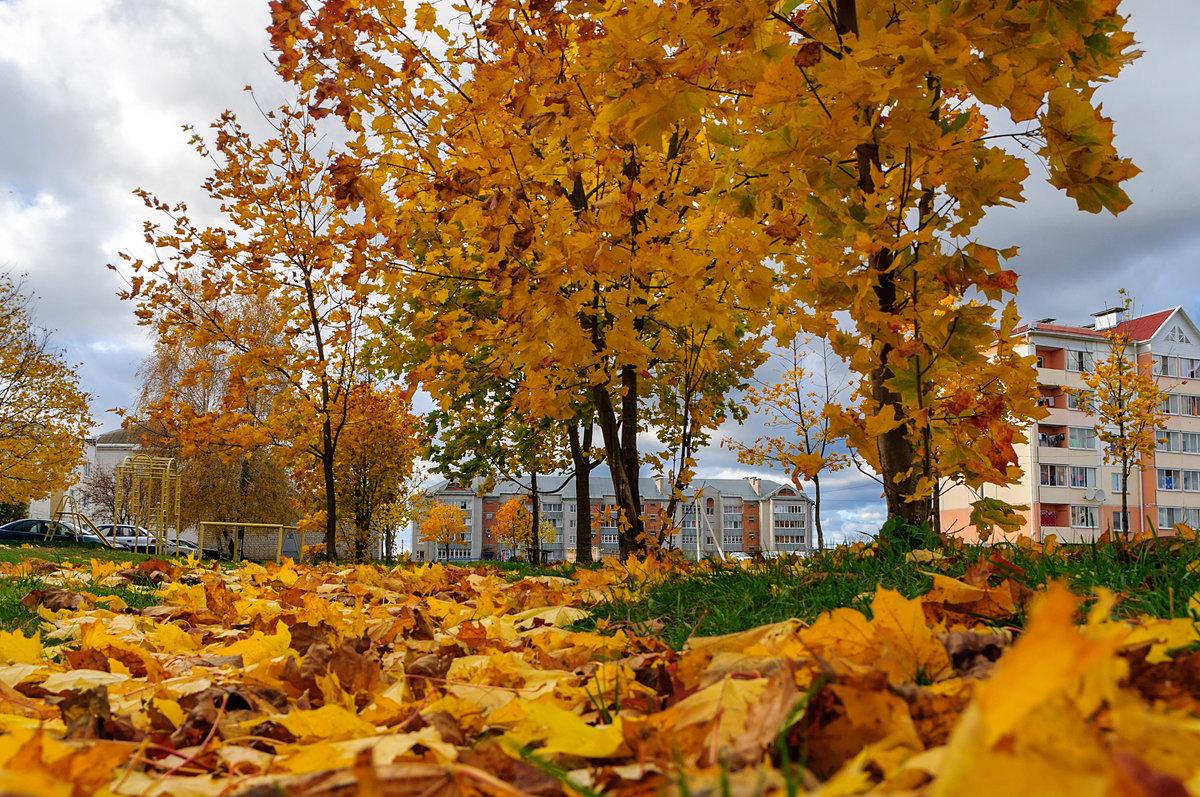 Золотит октябрь листья на деревьях - Анатолий Клепешнёв