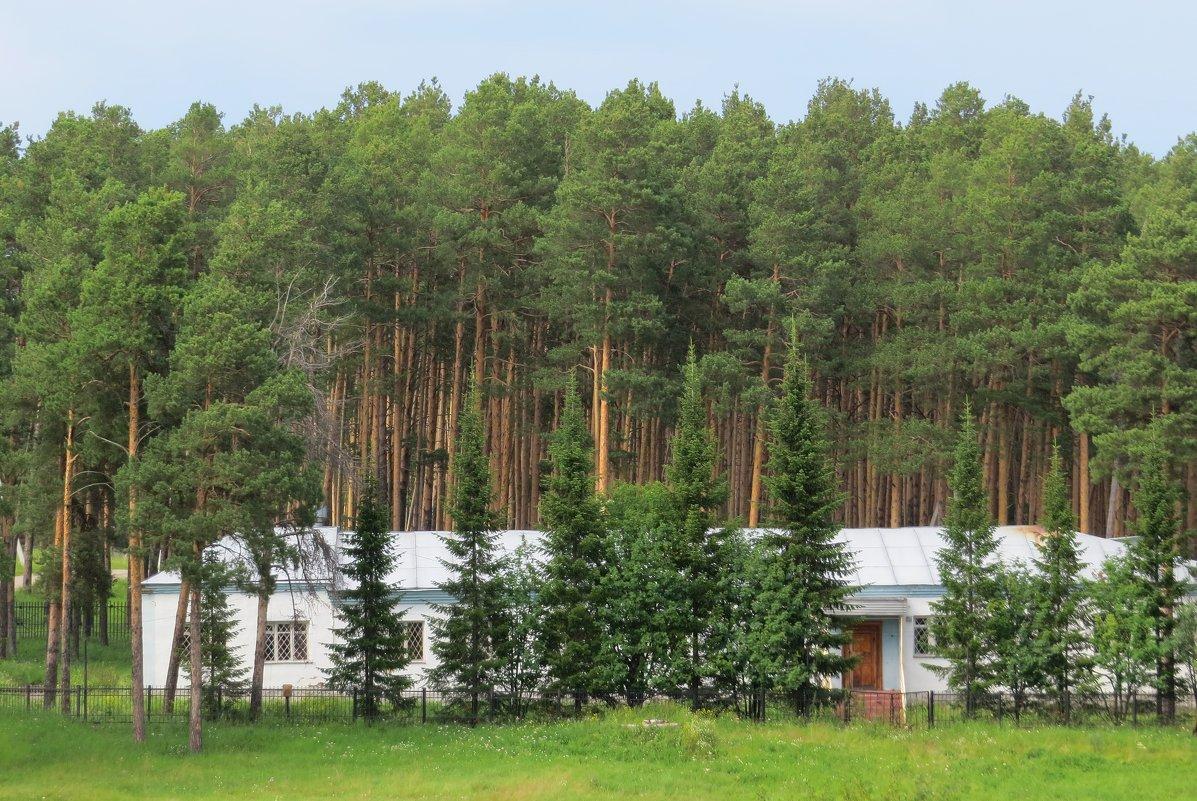 Дом у леса - Вера Щукина
